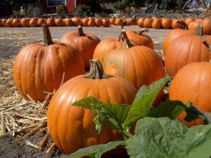 24-Hour Home Care Totowa NJ - Halloween Can be Fun For Seniors Too